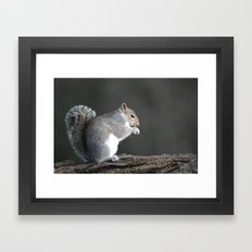 Grey Squirrel Framed Art Print