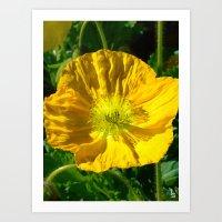 Golden Poppy Art Print