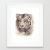 White Tiger 909 Framed Art Print