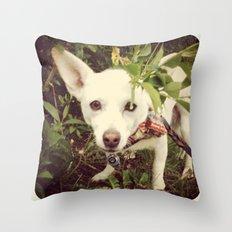 Looking Lobo Throw Pillow