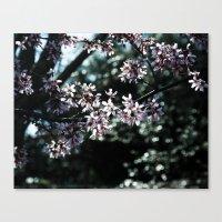 Sunlit Cherry Blossoms Canvas Print