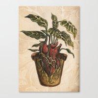 Heart Plant Canvas Print