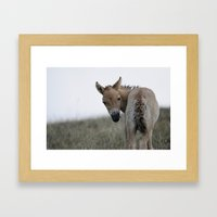 Baby Przewalski's Horse Framed Art Print