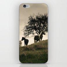 caballos iPhone & iPod Skin
