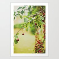 Cherries... Art Print