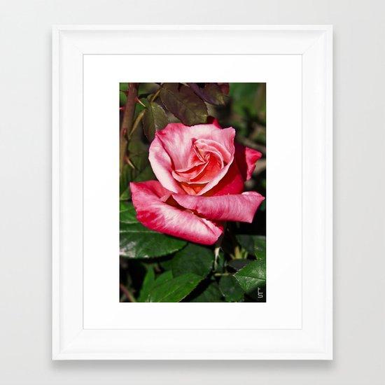 Red Rose I Framed Art Print