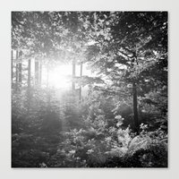 Sundown in the Forest Canvas Print