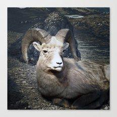 Tom Feiler Mountain Goat Canvas Print