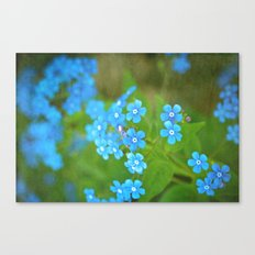 Forget Me Not Canvas Print
