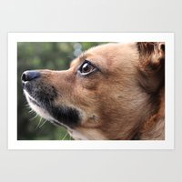 Brown Chihuahua  Art Print