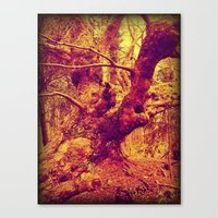 Old Man of the Woods. Canvas Print