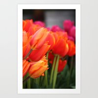 Cheery Tulips Art Print