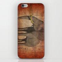 Pachydermy iPhone & iPod Skin