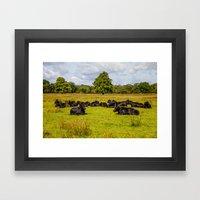 Irish Cows Framed Art Print