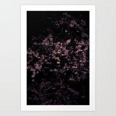 Flash Blossom Art Print