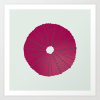 Sea's Design - Urchin Skeleton (Deep Pink) Art Print