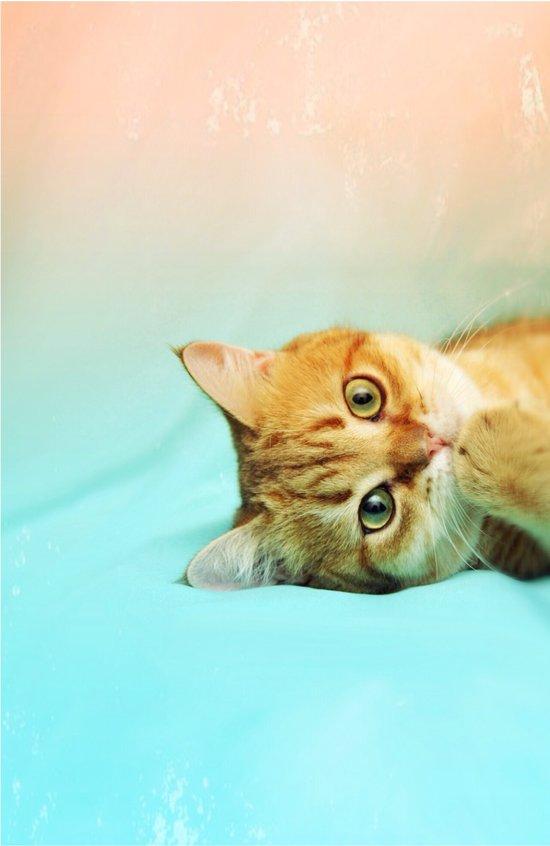 Amelia, the cat Art Print