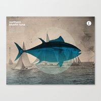 Northern Bluefin Canvas Print