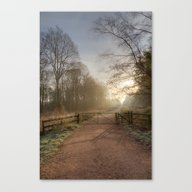 Spruce Ride Sunrise Canvas Print