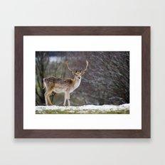 WINTER FALLOW DEER Framed Art Print