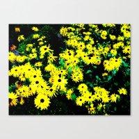Yellow Flowers (Edited)  Canvas Print