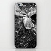 water drops XVII iPhone & iPod Skin