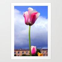 Glasgow Tulip  Art Print