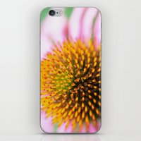 Coneflower iPhone & iPod Skin
