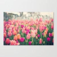 Tulips At Cheekwood Canvas Print
