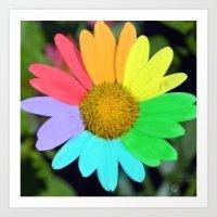 Colorful Daisy Art Print