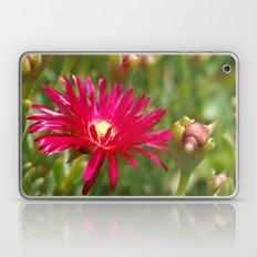 Pink Ice Plant Flower Laptop & iPad Skin