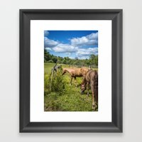 Out To Pasture Framed Art Print