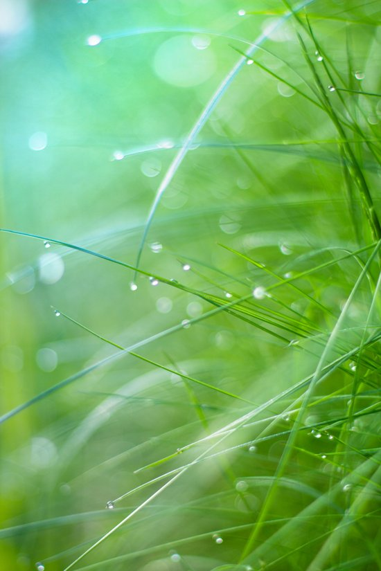 grass light Art Print