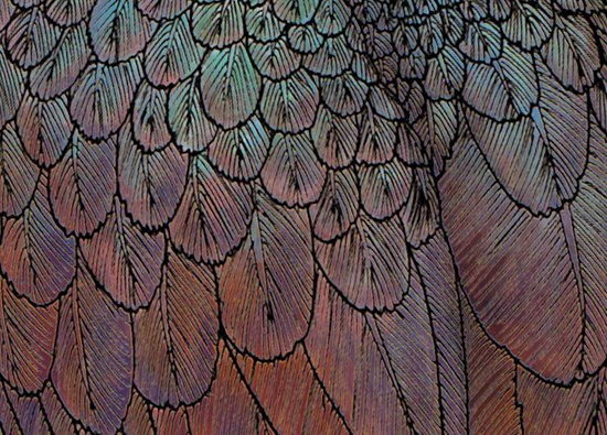 Feather Detail Canvas Print