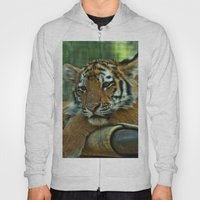 Baby Tiger Hoody