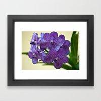 Wanda Orchid 8353 Framed Art Print