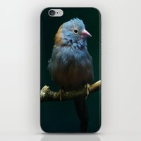 Cordon Bleu Canary iPhone & iPod Skin
