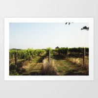 Vineyard Art Print
