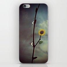 Raindrops & Sunflowers iPhone & iPod Skin