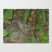 Canvas Print featuring Baby Bunny by Joy Reyes