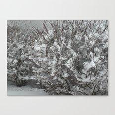 Snow Bush Canvas Print