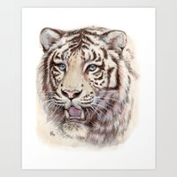 White Tiger 909 Art Print