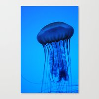 Jelly in the Blue Canvas Print