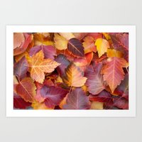 Autumn's Carpet Art Print