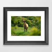 Stag 1/3 Framed Art Print