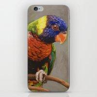 Rainbow Lorikeet iPhone & iPod Skin