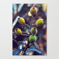 Exotic Fruits - Botanica… Canvas Print