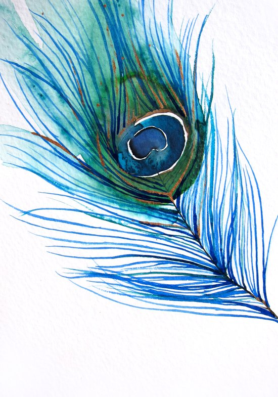 Peacock Feather I Canvas Print