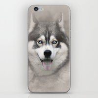 Siberian Husky 2 iPhone & iPod Skin