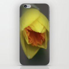 Easter Daffodil iPhone & iPod Skin